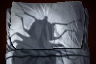 lukqmahpt38v Se Débarrasser des punaises de lit à Rixheim